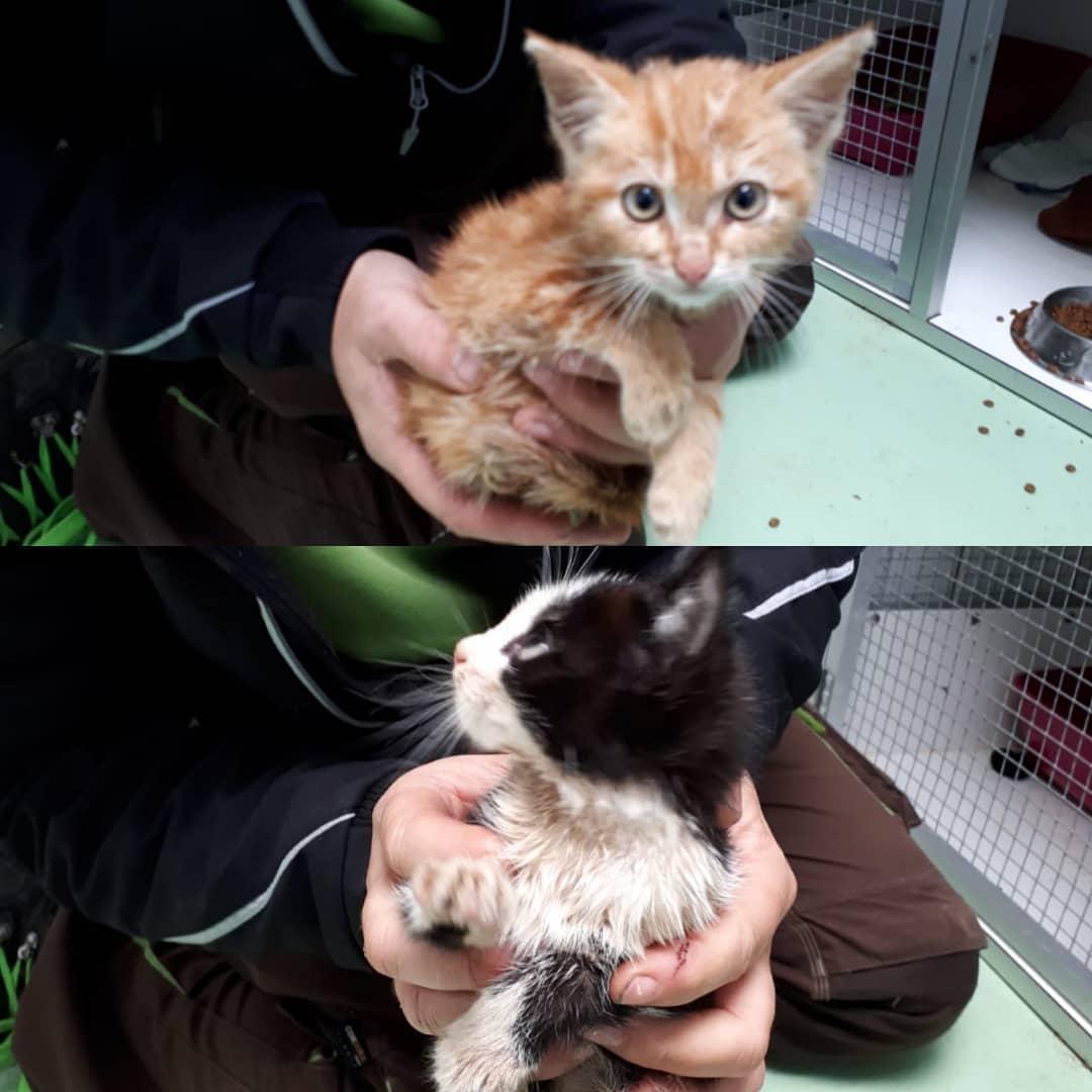 Drie kittens van ongeveer 10 weken oud Gedumpt in kliko in Kootstertille