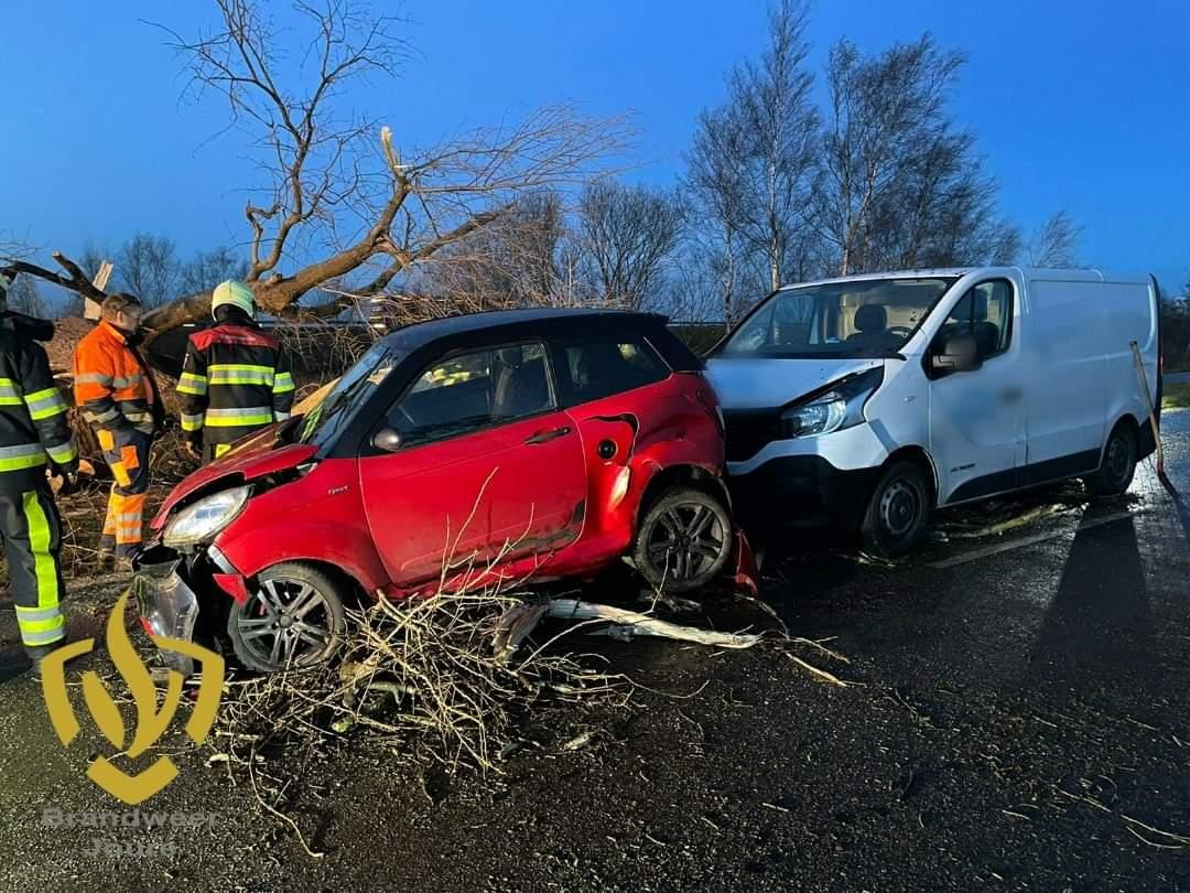 Drie Auto's beschadigd na omgewaaide boom bij Boornzwaag
