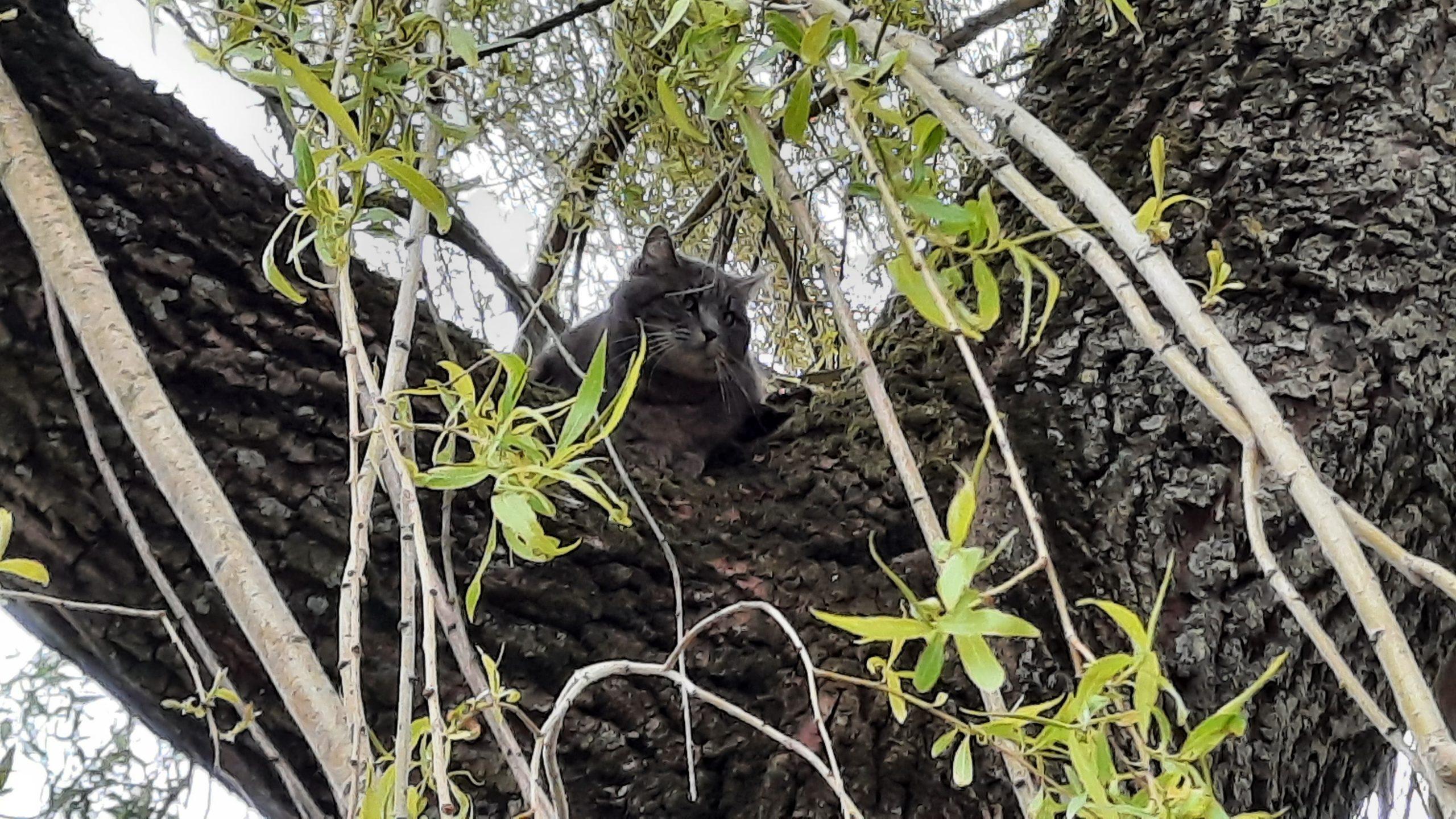 Brandweer Probeert kat uit de boom te halen springt zelf uit de boom